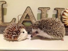 Real hedgehog vs fake hedgehog. Max thought he'd made a friend