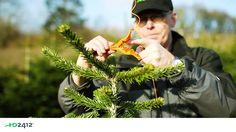 HD2412 - skovudstyr og alt til juletræer - en del af HedeDanmark