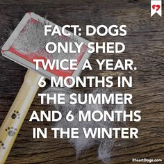 Fact: Dogs only shed twice a year. 6 months in the summer and 6 months in the winter. ... Those aren't dog hairs, they're magical fibers of love http://iheartdogs.com