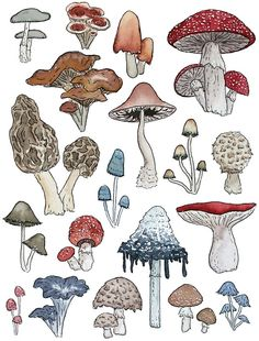 What's more whimsical than some colorful toadstools? Here are some hand drawn and painted mushrooms to add a natural element to your room, wardrobe, and electronics. Mushroom Drawing, Mushroom Art, Drawing Sketches, Art Drawings, Tattoo Sketches, Unique Drawings, Tattoo Drawings, Arte Indie, Arte Sketchbook