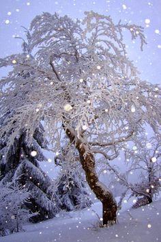 Beautiful & Peaceful Snow Scene