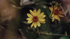 Colour edit!! Got bored so I did it now  : @jamesephotography  #photographer #blessed #flower #flowers #plant #plants #nature #colour #sunny #summer #yellow #green #petals #petal #love #life #relationship #grunge #vintage #details by jamesephotography