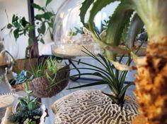 TERRAROOM | Les p'tits coins nature: atelier / Dans l'atelier #9 -> atelier, terrarium, végétal, succulentes, greenlife, TERRAROOM atelier, into the wild, into the home, home, creation, décoration, succulove, corail, coquillages, collection de plantes, centre de table, TERRAROOM studio, plantes addict, ma déco à moi, zen, la vie est belle, collection de trésors, réutiliser ses coquilles d'huîtres, workplace, noix de coco, planter dans des coquillages, paix et tranquilité, boutures de…