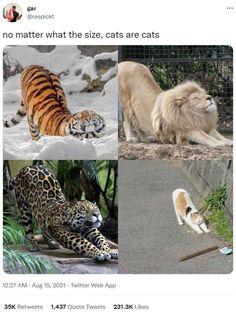 Cute Little Animals, Cute Funny Animals, Funny Cute, Cute Cats, Animal Jokes, Funny Animal Memes, Cat Memes, Animal Original, Crazy Cats