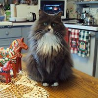 Mildred the Cat - Friday and my plans - Persona Paper http://www.personapaper.com/article/23194-mildred-the-cat---friday-and-my-plans