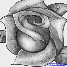 How to Sketch a Rose, Step by Step, Sketch, Drawing Technique, FREE Online Drawing Tutorial, Added by Dawn, April 16, 2012, 3:05:28 pm