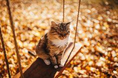 "fall-into-autumn98: "" crisp-season: "" Autumn Leaves~Haunted Trees "" autumn blog """