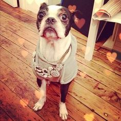 """Welcome! Browse my personally curated collections below, or click """"Shop Jewelry"""" above to see the entire Chloe + Isabel catalog!xoxo"""