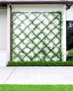Terrace Garden Design, Small Garden Design, Lattice Wall, Pool Colors, Village House Design, Vine Wall, House Landscape, Flowering Vines, Garden Structures