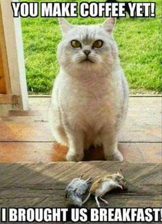 28 Funny Animal Pictures Of The Day