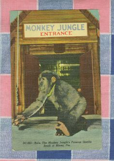 Monkey Jungle - Miami, FL.  Opened in 1933 and still going strong.