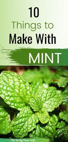 Mint Recipes, Herb Recipes, Healthy Recipes, Simple Recipes, Mint Plant Uses, Mint Plants, Healing Herbs, Medicinal Herbs, Herbal Remedies