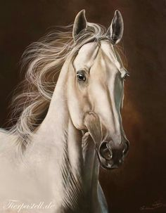 Equine Art, Horse Art, Nordstrom, Portraits, Printables, Birds, Paintings, Horses, Canvases
