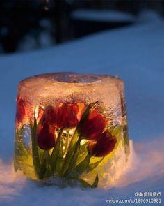 ice & flower