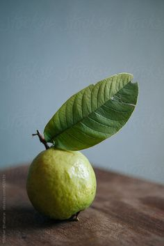 Guava by Shikhar Bhattarai | Stocksy United