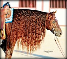 Wow! What a mane!! Sweet N Custom 2007 Quarter Horse
