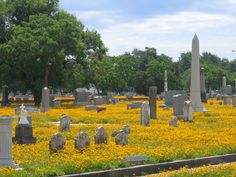 Galveston, Texas Cemetery, no need to place flowers because it's already in full bloom.