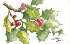 sbwatercolors and sketching: Holly Leaves Pen and Ink plus Watercolor Watercolor Christmas Cards, Christmas Drawing, Christmas Paintings, Christmas Art, Christmas Leaves, Xmas, Watercolor Projects, Pen And Watercolor, Watercolor Flowers