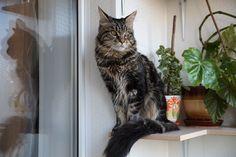 My pet - observer!