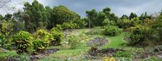 The focus of this 15-acre botanical garden is Hawaiian ethnobotany: the study of the Hawaiian people and their plants. The garden is named for kama'āina botanist Amy Greenwell. http://ponoexpress.com/