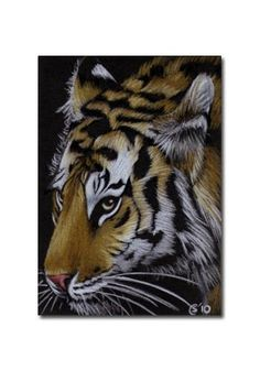 TIGER 34 portrait big cat feline pencil painting Sandrine Curtiss Art Limited Edition Print ACEO by Sandrinesgallery