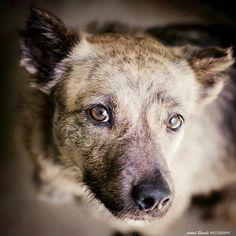 La Ternura nos hará reflexionar - antua blonde photography -  fotógrafo solidario - barcelona - animal - fotos - reportajes - animal de compañía - maresme - cat - gat - gato - dog - gos - perro