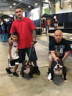 Apollo Anton Ohno on left. His daughter on right. American Bullies, Bully Dog, Family Dogs, Anton, Apollo, Daughter, Pocket, Animals, Animales
