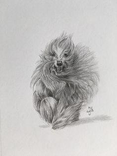 Briard dog graphite drawing   • mariellevanleeuwen@live.nl • AR•T•INT • www.facebook.com/artintx • instagram @artint