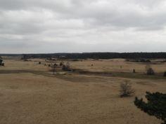 Shifting sands near Kootwijk (Netherlands)