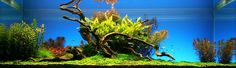 Bubbles Aquarium - Aquascapes ( Nature Designs 2008)