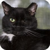 Check out Handsome's profile on AllPaws.com and help him get adopted! Handsome is an adorable Cat that needs a new home. https://www.allpaws.com/adopt-a-cat/american-shorthair/1571190?social_ref=pinterest