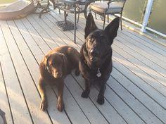Max & Roscoe