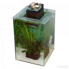Acuario fluval chi 19lts art culos pinterest for Fluval chi fish tank