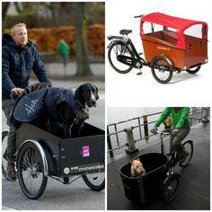 Triciclos y perros