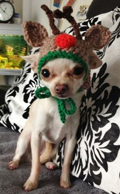 Reindeer dog hat - for small breed - Medium size dogs chihuahua / yorkie