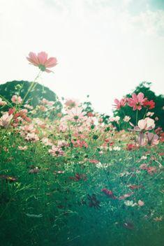 Wild flowers, flower, flowers, nature, garden, floral