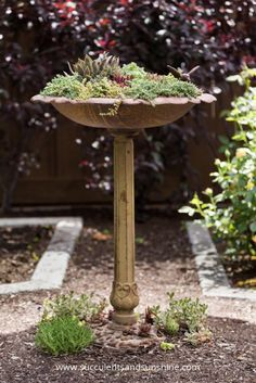Create a stunning piece of garden decor by filling a bird bath with cold hardy succulents