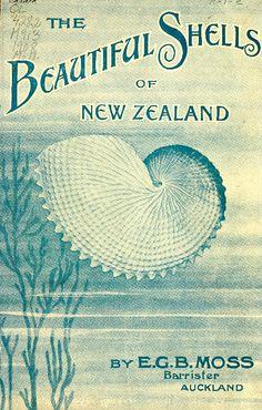 The Beautiful Shells of New Zealand- E.G.B. Moss