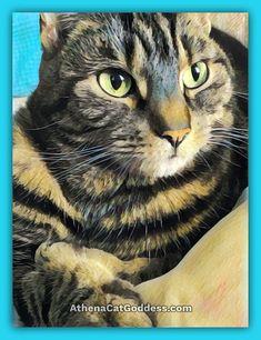 Athena Cat Goddess Wise Kitty: Lounging On The Sofa #caturdayart Cruelty Free Shop, Photo Editor Free, Animal Paintings, Birthday Greetings, Art Blog, Animal Pictures, Pet Adoption, Pop Art, Artsy