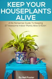 Keep Your Houseplants Alive: A No Nonsense Guide To Keeping 27 Awesome Indoor Plants Alive & Kickin' by [Foster, Nell] Hanging Succulents, Hanging Plants, Succulents Garden, Growing Succulents, Succulent Plants, Lucky Bamboo Care, Easy Care Houseplants, Growing Aloe Vera, Big Indoor Plants