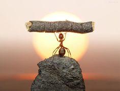 倫☜♥☞倫 Ant