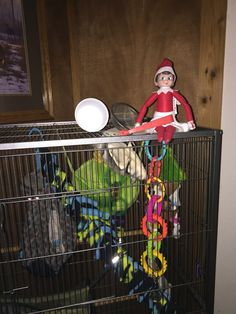 Suzy Jingle Bella fed all the meal worms to Kit & Kat.  Elf on the shelf 2015.  Sugar gliders.
