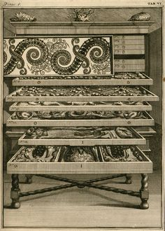 Redressing the Balance: Levinus Vincent's Wonder Theatre of Nature | The Public Domain Review
