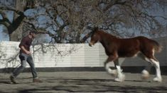 Ad No. 37 - The Clydesdale In this Budweiser ad, a trainer takes care of a clydesdale like a parent from when it was young while the latter interacts playfully with him as it grows up. Despite their close bond, they have to part when the horse is transferred to the company. Nevertheless, the heartwarming twist at the end is a tear-jerker for many viewers. Overall, the ad is executed effectively with a relatable storyline and an excellent song choice, despite the lack of dialogue.