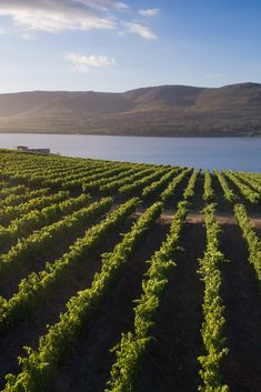 Experience a private vineyard tour with a gourmet dining experience at the picturesque Benguela Cove Lagoon Wine Estate - the crown jewel of the Walker Bay wine region. Vineyard, Tours, Dining, Jewel, Crown, Outdoor, Wine, Gourmet, Outdoors