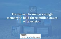 Body Facts : The human brain | did you know