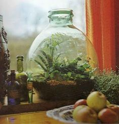 A bottle garden! What a great way to repurpose containers and to bring the outdoors in during cold weather/