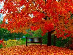 Red Autumn Trees.  /So very pretty EL./