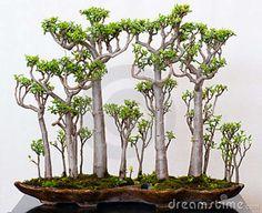 ~ Bonsai succulents ~