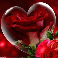Roses and hearts gif. Heart Images, Love Images, Heart Pictures, Beautiful Gif, Beautiful Roses, Beautiful Hearts, Beautiful Morning, Hearts And Roses, Red Roses